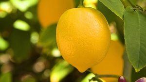 Lemon from Argentina