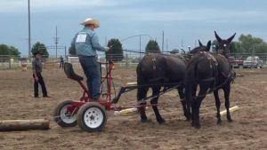 Buffalo County horse