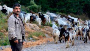 Cypriot farmers