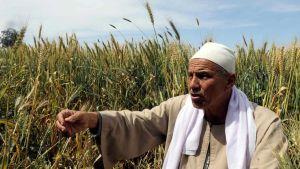 Egypt farmer