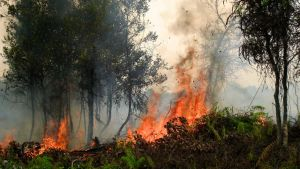 Forest fires in Central Kalimantan