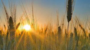 Grain exporter Russia