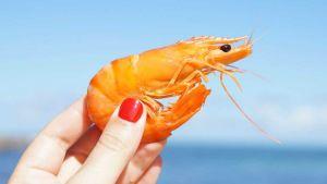 Indonesian shrimp