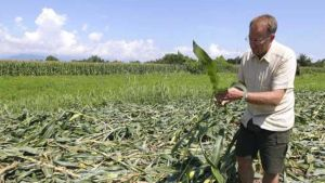 Italy farmer
