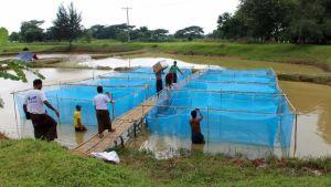 Myanmar aquaculture