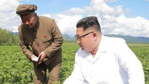 North Korea farmer