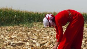 Syria farm