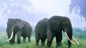 Tanzania poaching