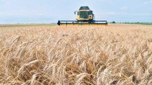 Ukrainian grain exports