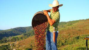 Brazil's coffee