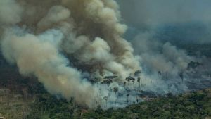 Fires in Amazon