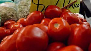 Mexican tomato