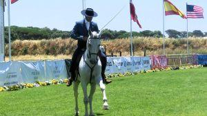 Portuguese horse