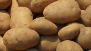 Sri Lanka potato