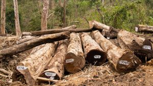 Myanmar illegal timber