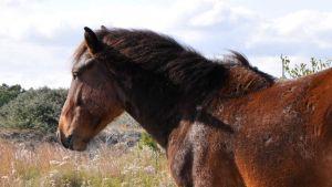 North Carolina horse