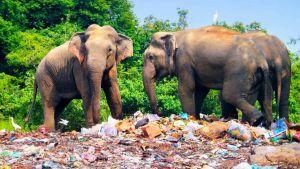 Sri Lanka plastic goods