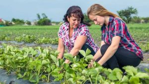 Ukraine farmers