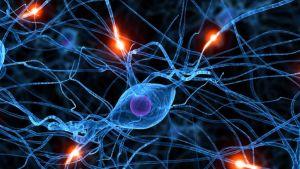 cells in brain