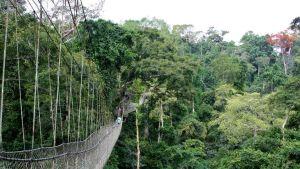 Ghana forest