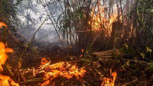 Indonesia fire