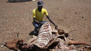 Namibia drought