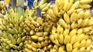 Philippines bananas