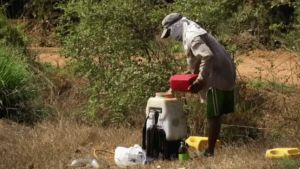 Thailand pesticide