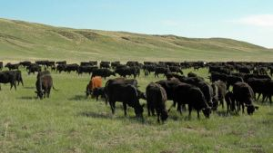 U.S. livestock