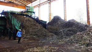 Uganda sugarcane export