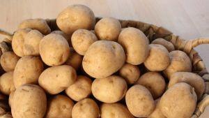 UK potato