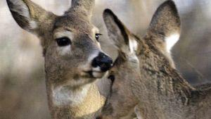 Pennsylvania deer farm