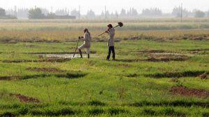 Syria farmer