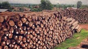 Timbers Myanmar