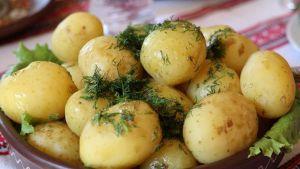 Ukraine potato