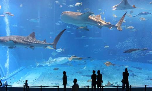 underwater-zoo-names-dubai-aquarium_ogmttm Tempat referensi terbaik Menikmati Malam di Dubai Travel Travel Guides