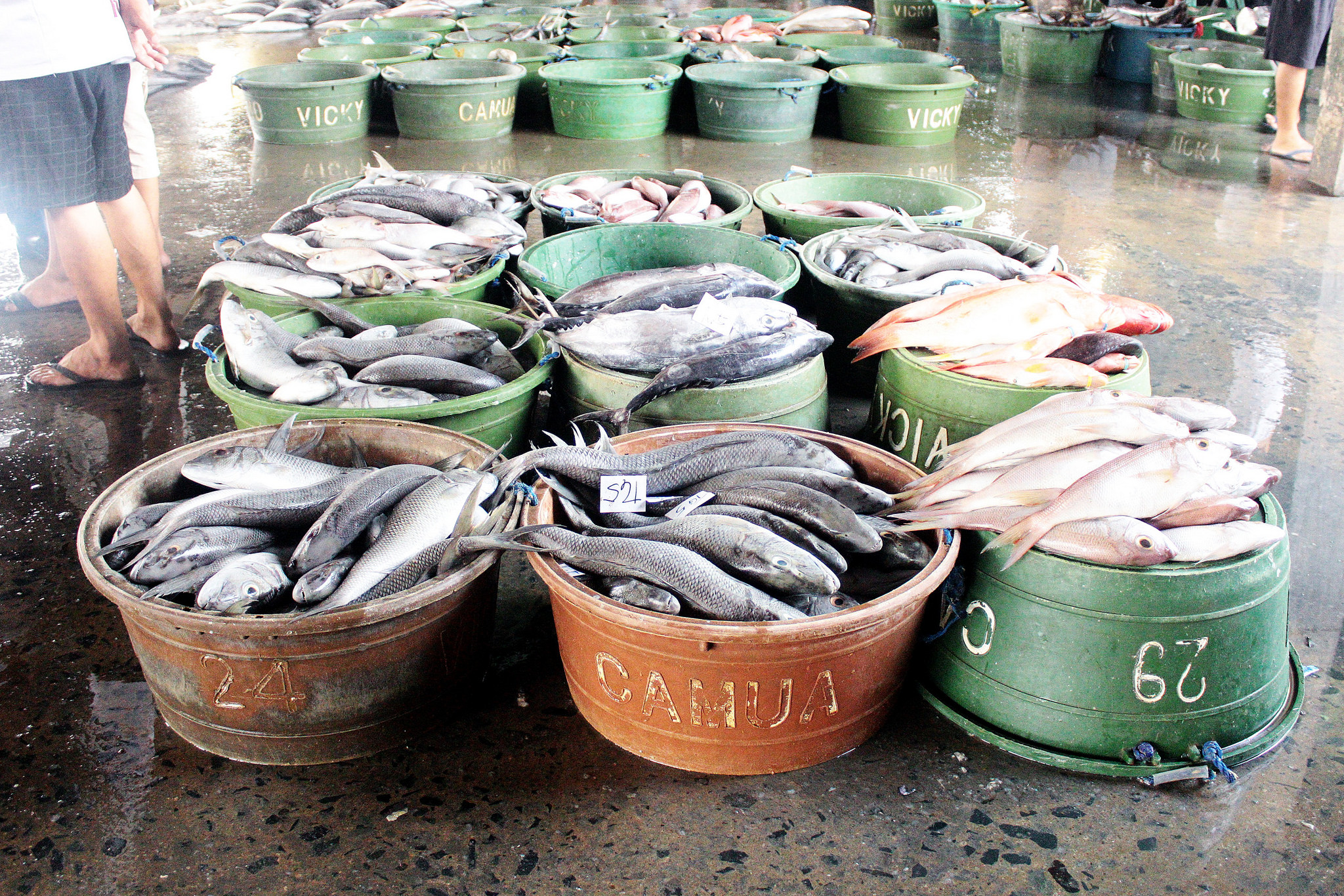 菲鱼网-Navotas渔港市场