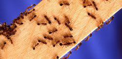 Wood Dwelling Pests