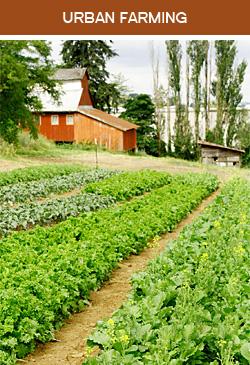 Farm Fields and Barn