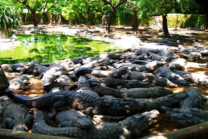 The Madras Crocodile Bank.