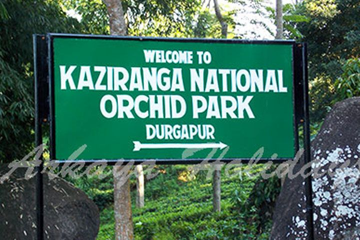 Kaziranga National Orchid Park