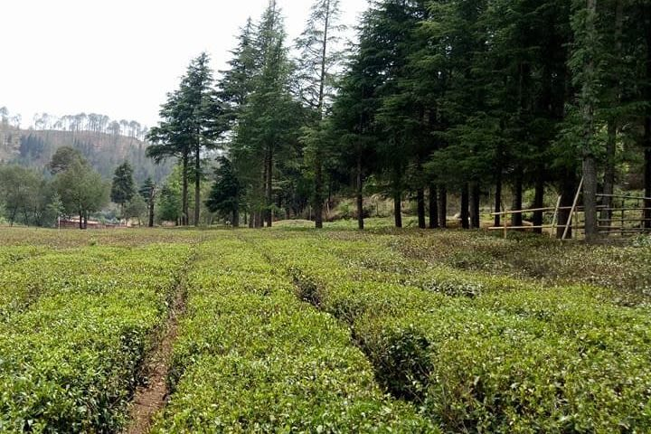 Ghorakhal Tea Factory