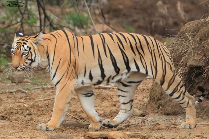 Sariska National Park