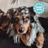 Balu, kutyafekhely, párna kutya részére, mosható, ortopéd, csúszásgátló, légáteresztő memóriahab, XXL méret (140 x 10 x 100 cm)