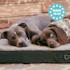 Balu, kutyafekhely, párna kutya részére, mosható, ortopéd, csúszásgátló, légáteresztő memóriahab, M méret (79 x 8 x 60 cm)