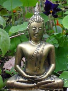 Thaibuddha