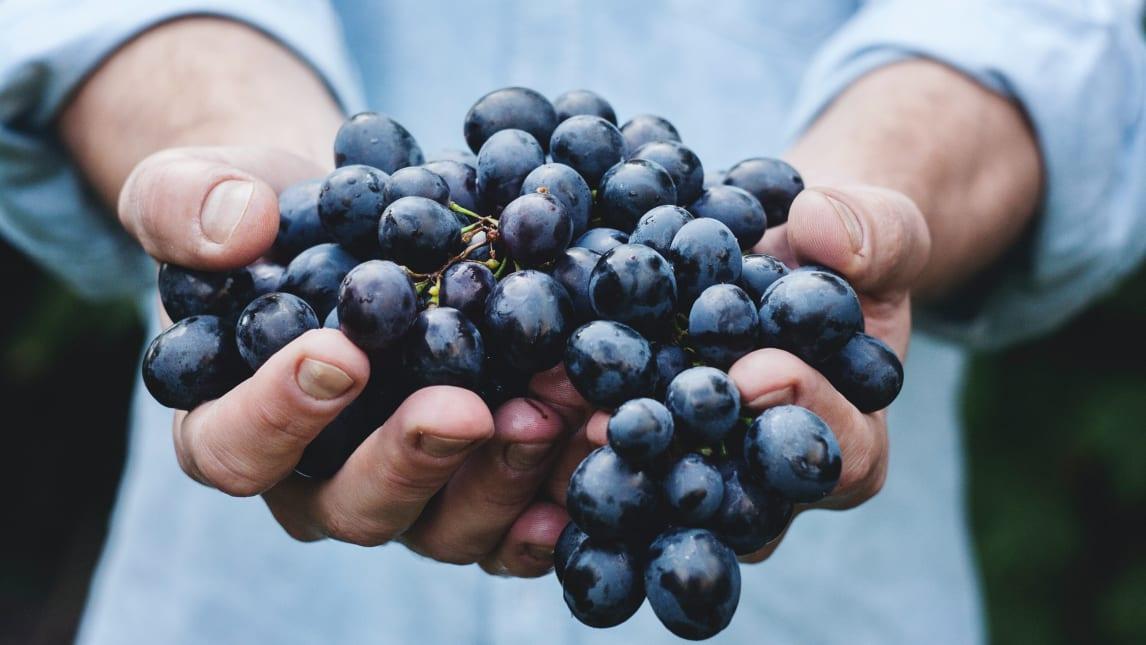 大地のめぐみから育ったみずみずしい葡萄と「Chapon」の関係