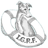 Italian Greyhound Club of America Rescue
