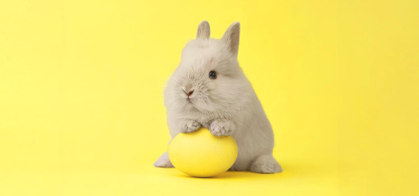 Nézd meg, mit hozott a CHERRISK húsvéti nyuszija! 🌷🐇