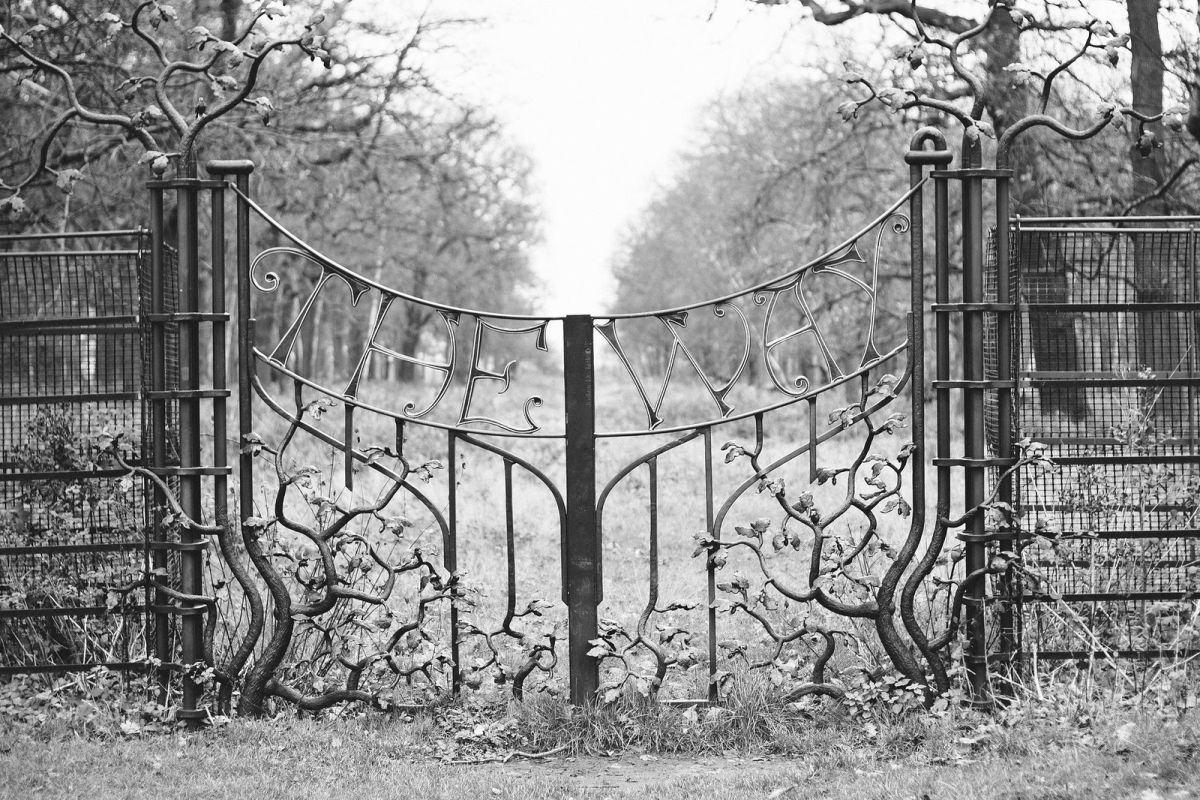 Reflective Walk Through Richmond Park